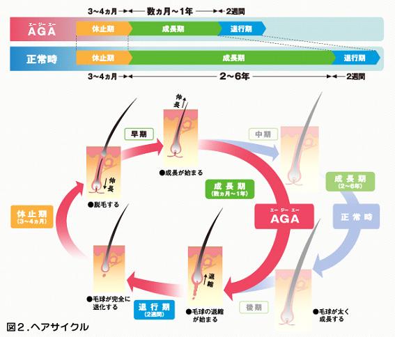 図2. ヘアサイクル